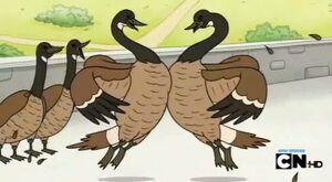 Regular show-a bunch of full grown geese 0015