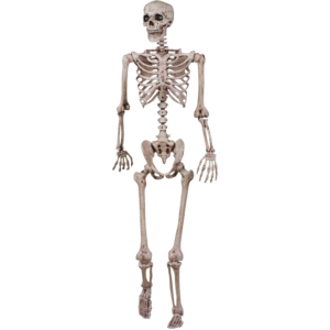 Halloween-Skeleton-PNG-Image