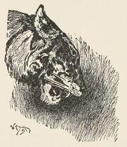 Shere Khan illustration