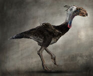 Daren-horley-terror-bird-body2