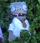 Dr. Zomboss (LuigiFan00001)