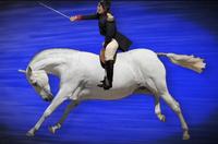 Napoleon Bonaparte On His Horse