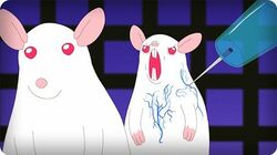 SCIENTIFICALLY ACCURATE™ PINKY AND THE BRAIN