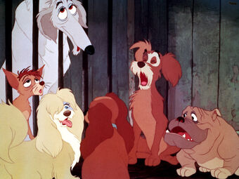 Pound Dogs, (Lady and the Tramp)