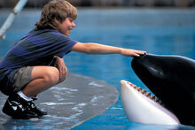 1427740186-free-willy-jason-james-richter