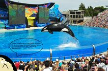 La-fi-seaworld-entertainment-shakeup-20160219