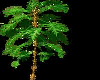 PapayaTree bare