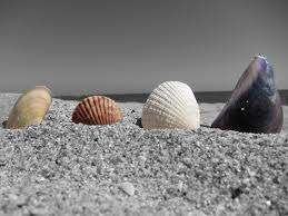 File:Seashells5.jpg