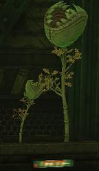 HH plants