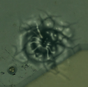 Welder Bullet Hole