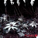 Dir en grey - Ain't Afraid to Die Single Cover