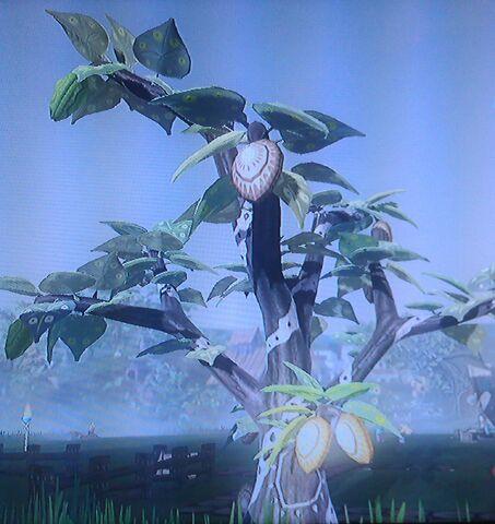 File:Hazelnut Tree.jpg