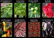 Экватор продукция флора