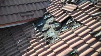 Bat Infestation Under Tile Roof