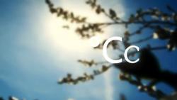 CC zola