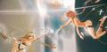 Gravity fantasia