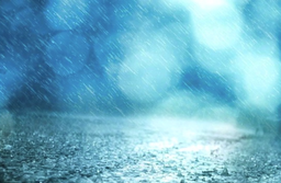 "Image of ""Rainy Trail"""