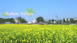 "Image of ""Mellow Yellow"""