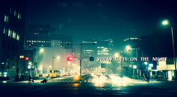 Stray Cats On The Night