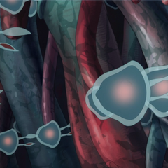 The antibodies.