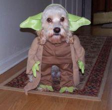 Plik:Yoda1.jpg