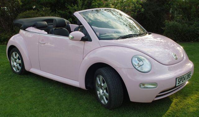 File:Pink Beetle.jpg
