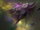 Leviathan (StarCraft)