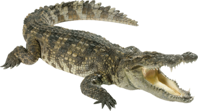 Crocodile PNG13185
