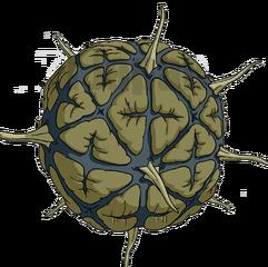 Bacilus