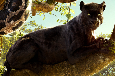 Bagheera Jungle Book 2016-1-