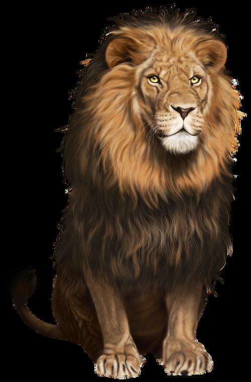 Lion-hd-png-lion-transparent-png-clip-art-image-859