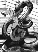Anaconda (Baki)