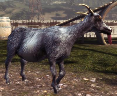 Pilgor Goat Simulator