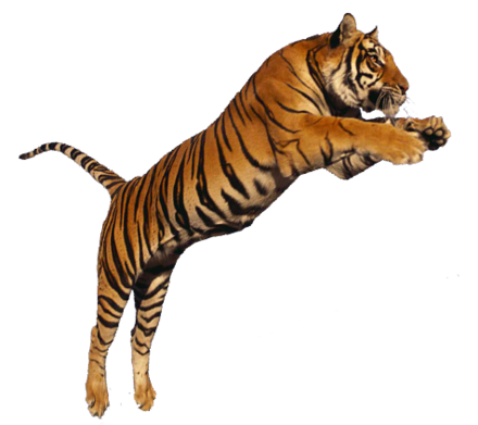 Tiger-jumping-transparent-png-image