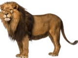 Lion (Real World)