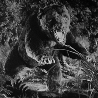 Cave Bear (King Kong)