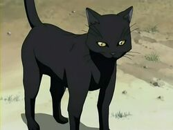 Yoruichi Cat