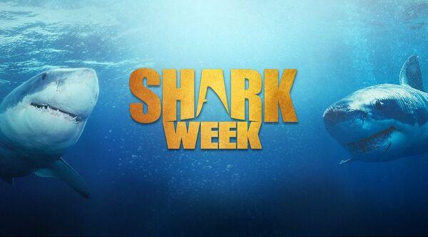 Sharkweek1