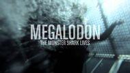 Megalodon (Shark Week)