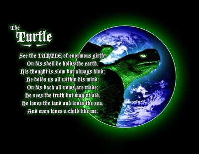Maturin the Turtle