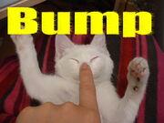 Bump kitty