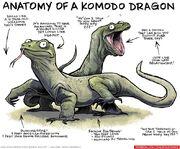 Anatomy-of-a-komodo-dragon-260731