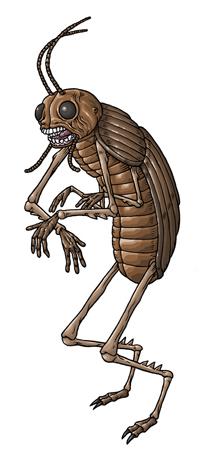 24-coleopteran