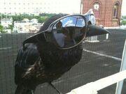 Bird - cool