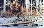 Bigfoot patterson01
