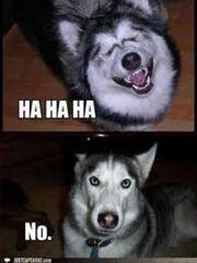 Hahaha-No-Meme-01