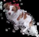 Mongrel Dog