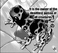 Kokoe Poison Dart Frog