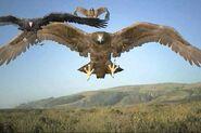 The Birds (Birdemic)