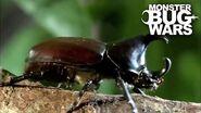 Rhinoceros Beetle Vs Meat Ants MONSTER BUG WARS